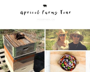 Apricot Lane Farms Tour