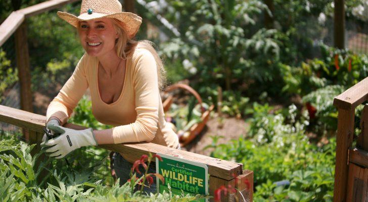 June - Farmhouse Garden