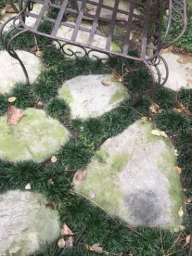 DIY Outdoor Moss