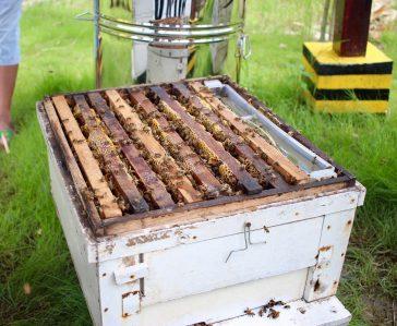 Happy Honey Bee Awareness Day!