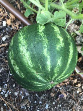 CSUN Garden Grant Update