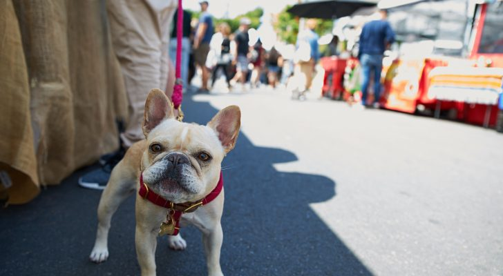 Dogs & the Farmers Market