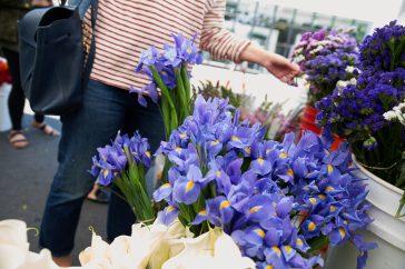 #wildaboutwednesday    Skyline Flowers