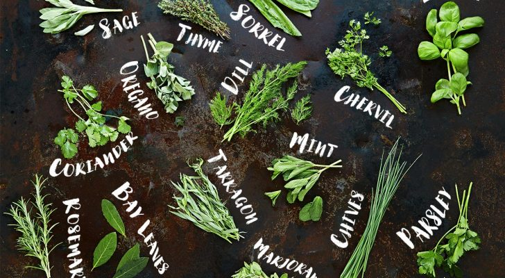 #thursdaythrive   all about Fresh Herbs
