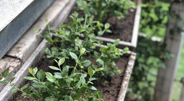 McColm Family Farm - Farmhouse Plants