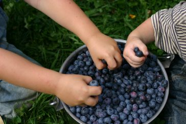 #thursdaythrive      all about Blueberries!
