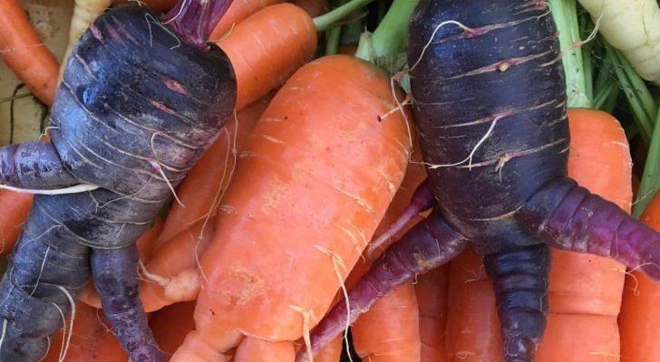 #wildaboutwednesday Alcantar Organic Farms