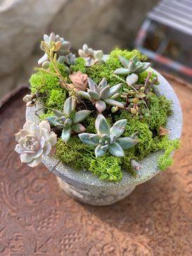 House Plant Appreciation Day