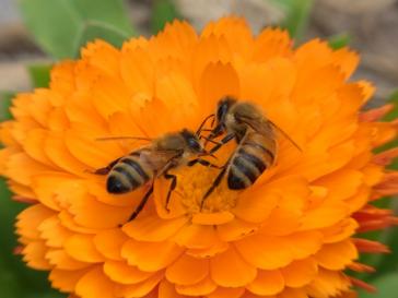 The secret to a successful garden? Pollinators!