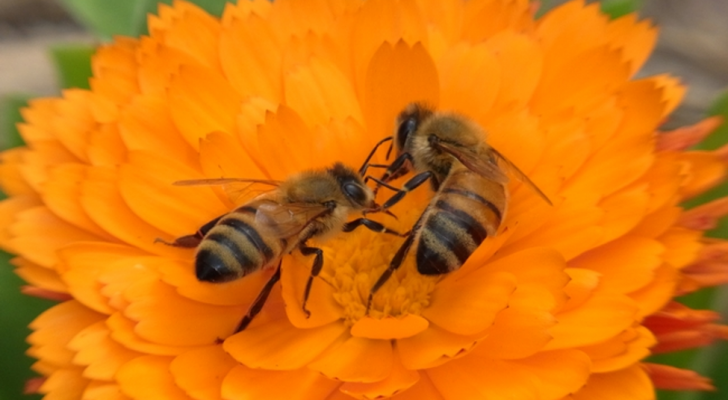 The secret to a successful garden? Pollinators!